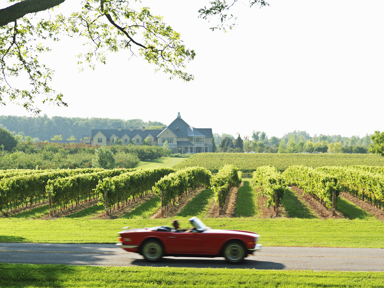 red sports car on road passing vineyards and winery in the Niaga
